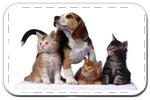 Товары для животных